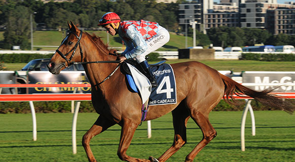 Red Cadeaux euthanised due to 'irreversible complications' after Melbourne Cup injury