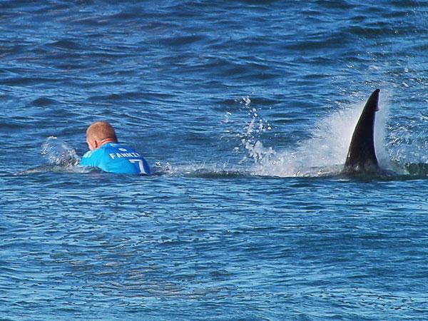 Fanning 'still jumping at shadows' after shark attack