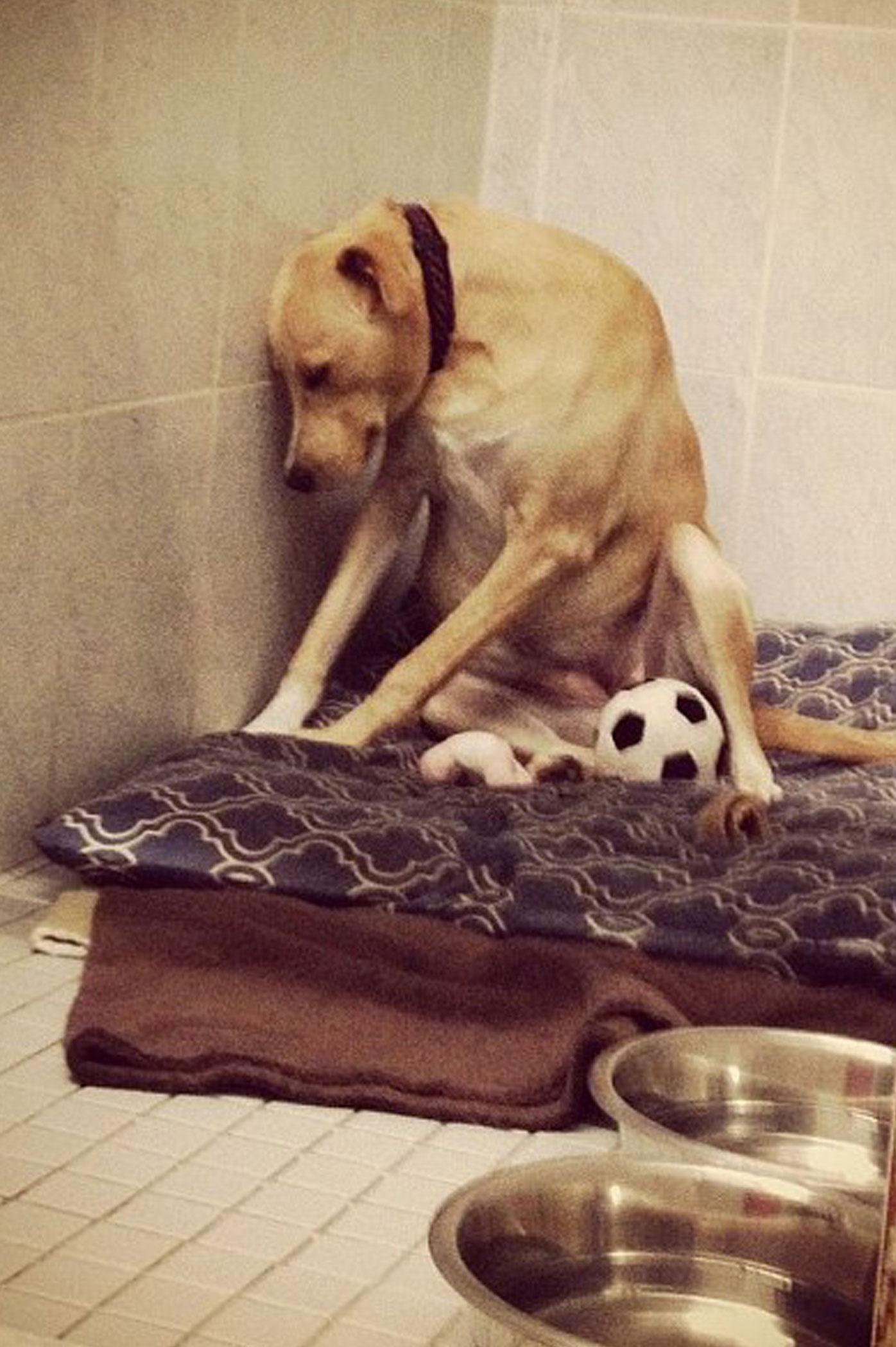 Photo of 'world's saddest dog' goes viral