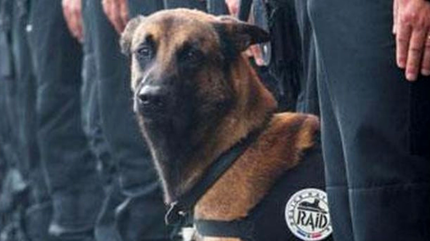 Diesel was killed in terror raids in the northern Paris suburb of Saint Denis.