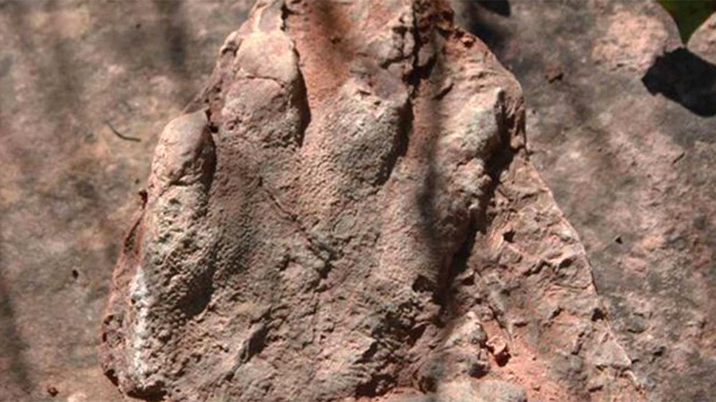 Hiker stumbles across 240 million-year-old fossil
