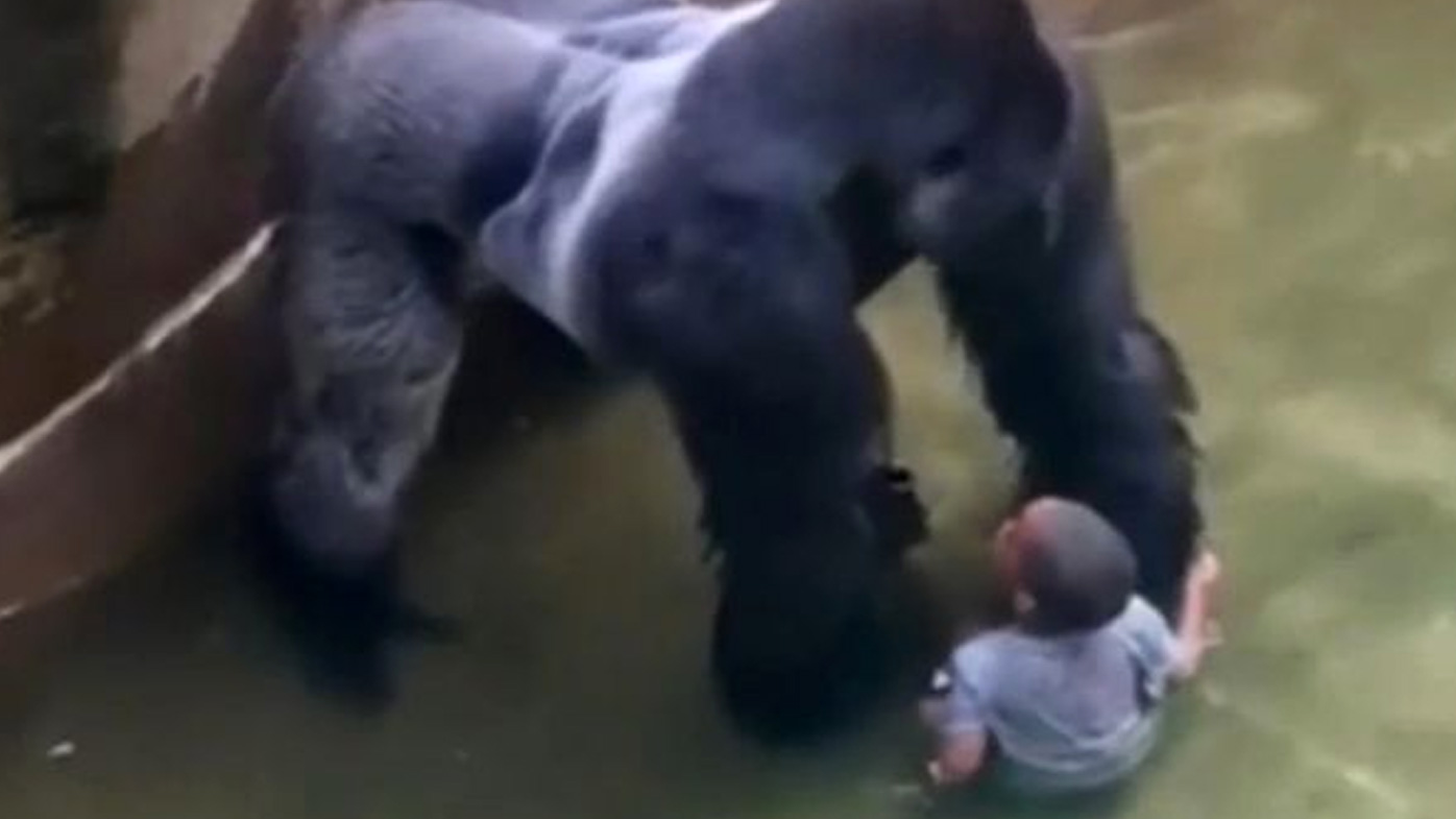 Harambe, the Cincinnati Zoo gorilla, was fatally shot after a toddler fell into his enclosure.