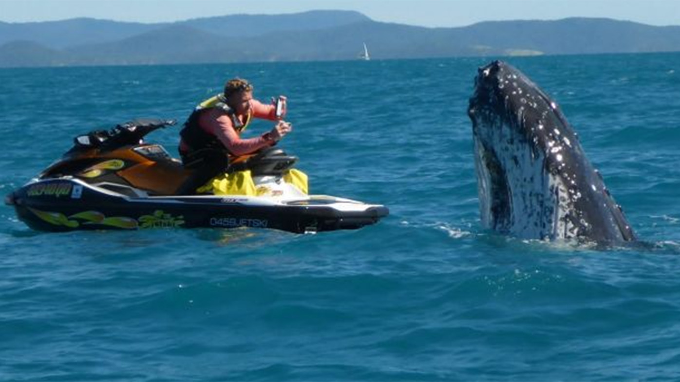 The humpback was happy to pose for photos. (Whitsunday Jetski Tours)