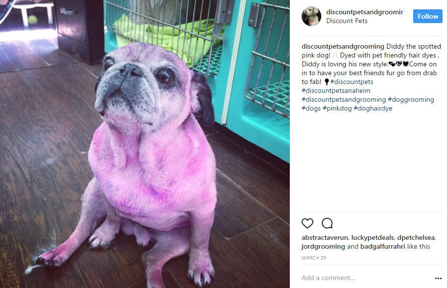 Why shaving a husky is bad but doggie fur dye isn't