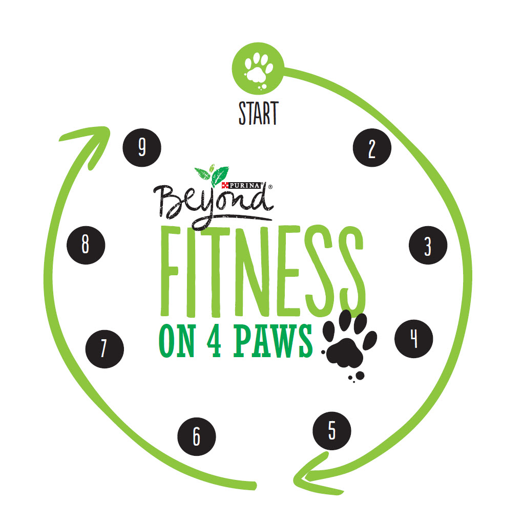 Barkercise: The 40-minute circuit workout for dogs (and their owners!)