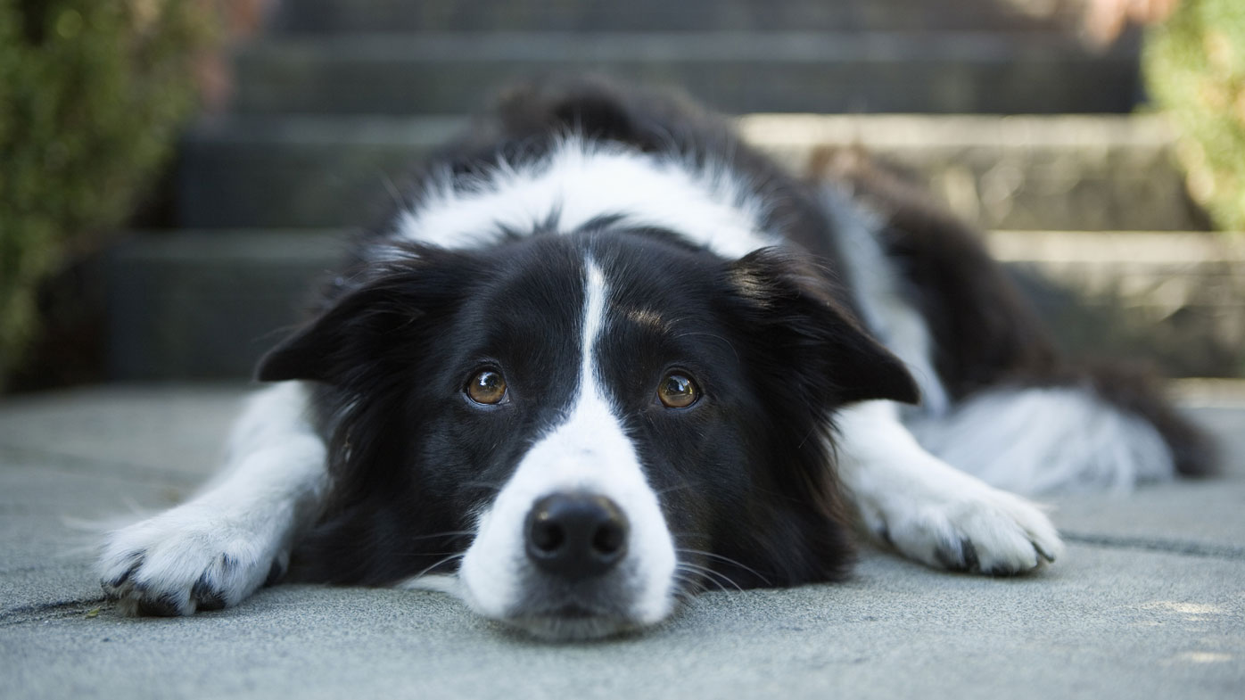 How to tell if your pet has separation anxiety