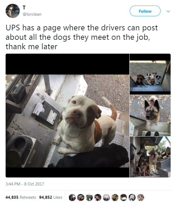 PHOTOS: There's a Facebook page where posties share photos of the dogs they meet each day