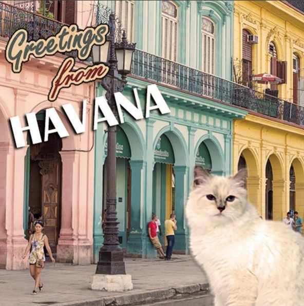 <p>As the party winds down in New York, another is just about to get underway in Cuba. Chanel's long-awaited cruise presentation in the South American city has proved entirely enchanting to the Insta-verse and the show hasn't even started yet. Picture-perfect cocktail parties, candy-coloured convertibles and snaps of pastel <em>casas </em>have sent the fashion elite into a frenzy. Click through to see the best posts so far, including a glowing Gisele Bundchen.</p>