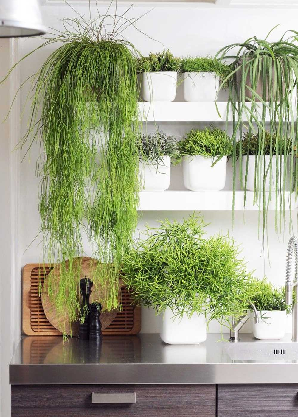 How To Keep Your Indoor Plants Alive 9homes