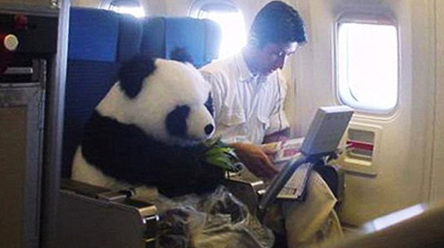 hoax panda photo fools inter    9news   au