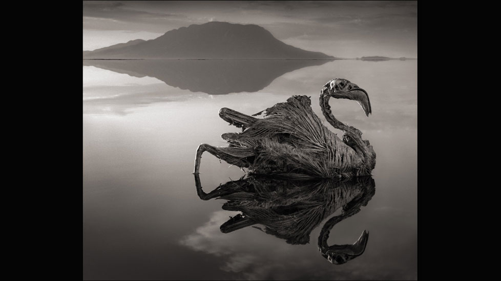 """""""I could not help but photograph them,"""" Nick Brandt said of the calcified creatures, including this flamingo pictured on Lake Natron in Northern Tanzania. (Nick Brandt)"""
