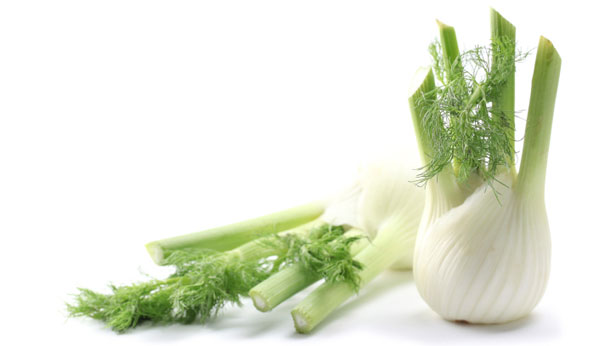 Fennel recipes