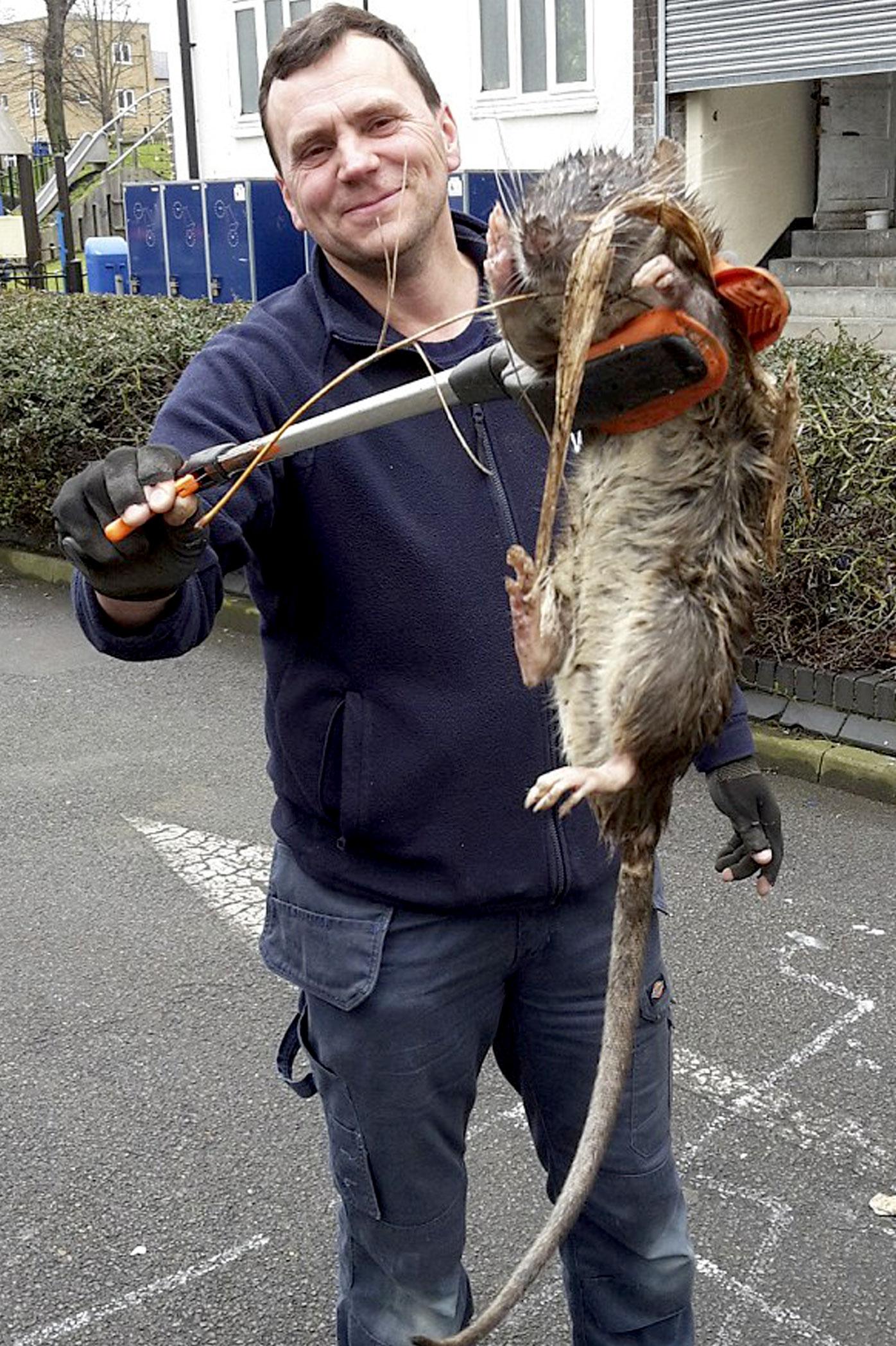 Фото больших крыс 12 фотография