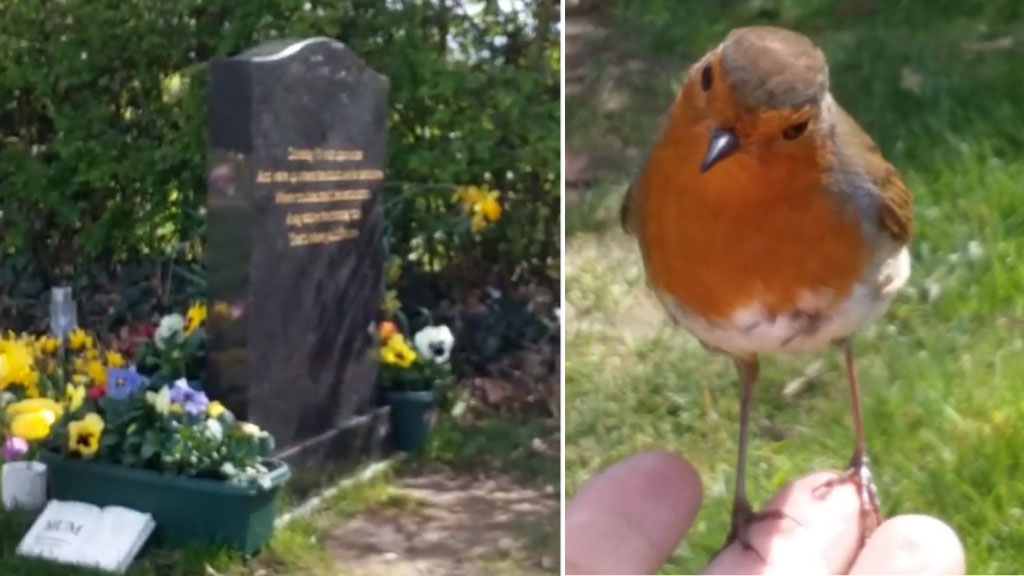 grieving mother red robin