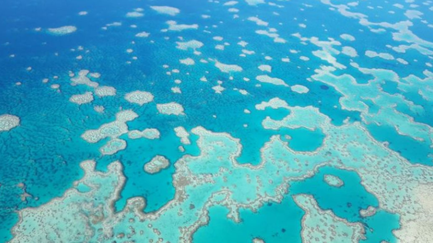 Scientists find evidence of coral bleaching at iconic Heart Reef