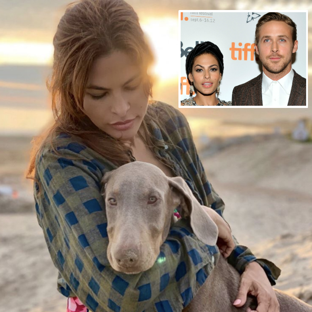 Celebrities and their pets: Photos