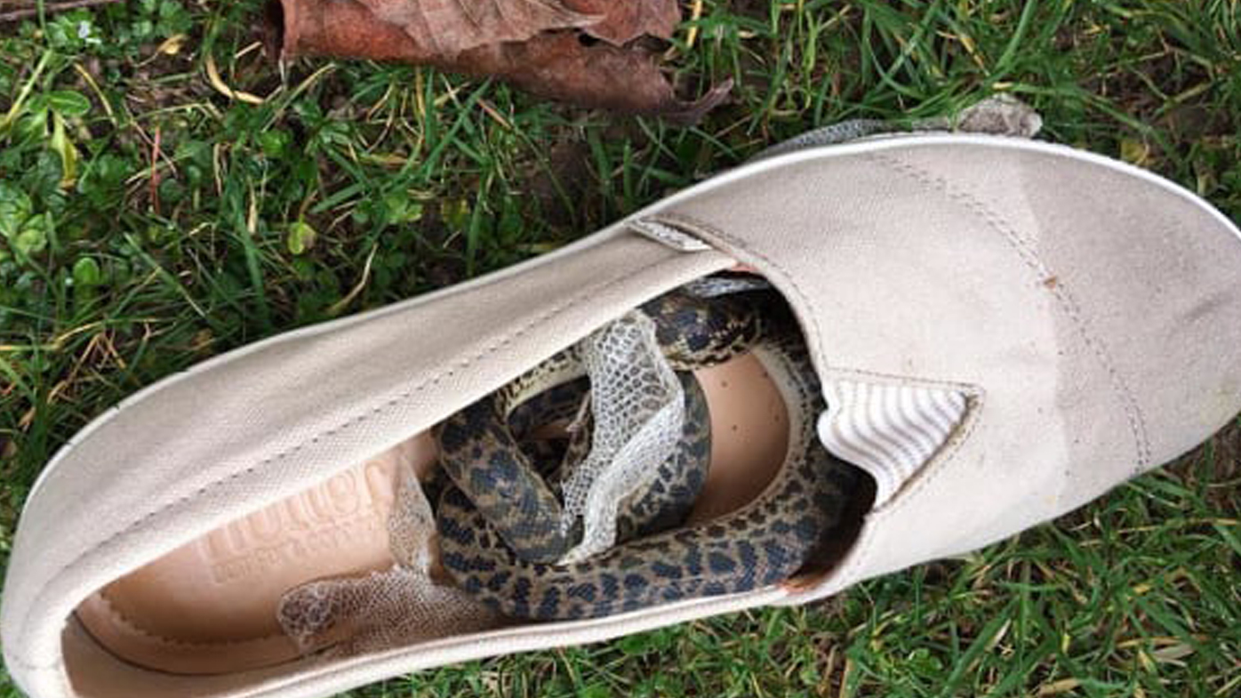 Snake hitches 15,000km ride from Queensland to Scotland in grandmother's shoe