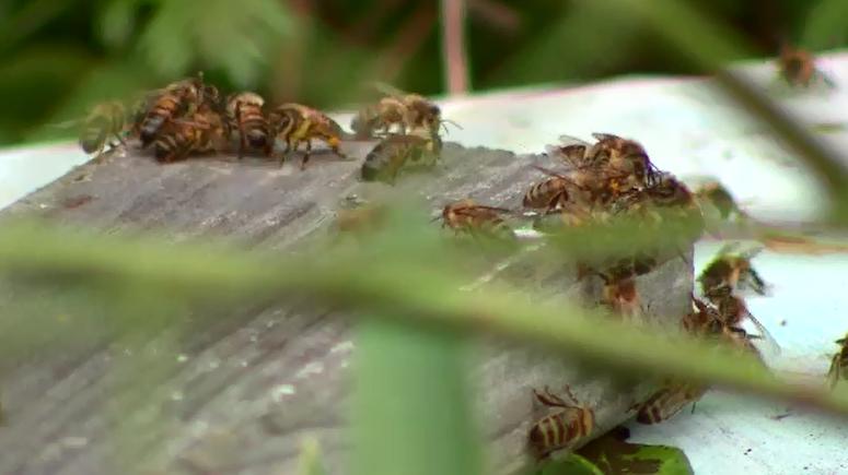 Bee sting allergy breakthrough