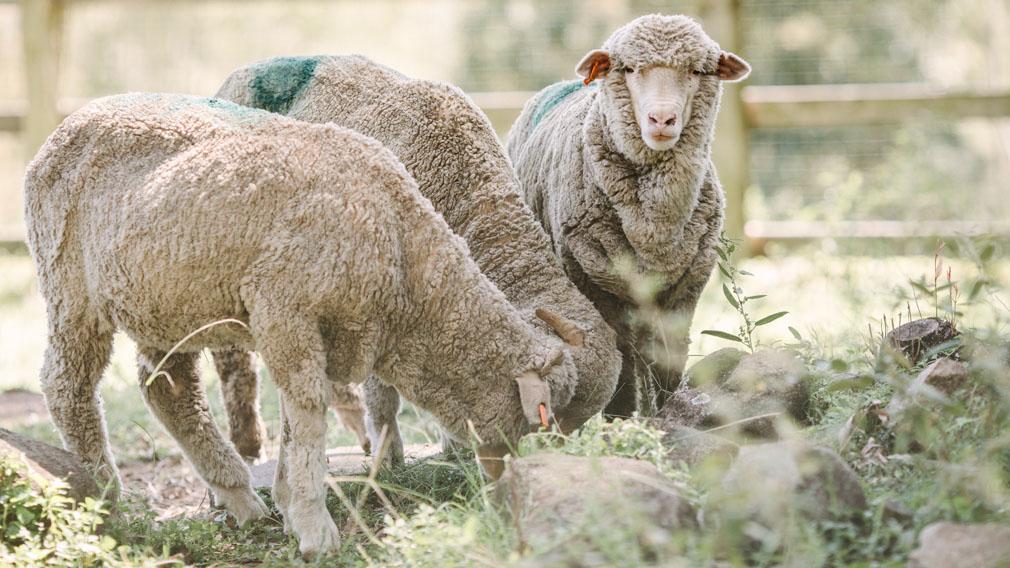 Vegan activists fined for trespass in Queensland