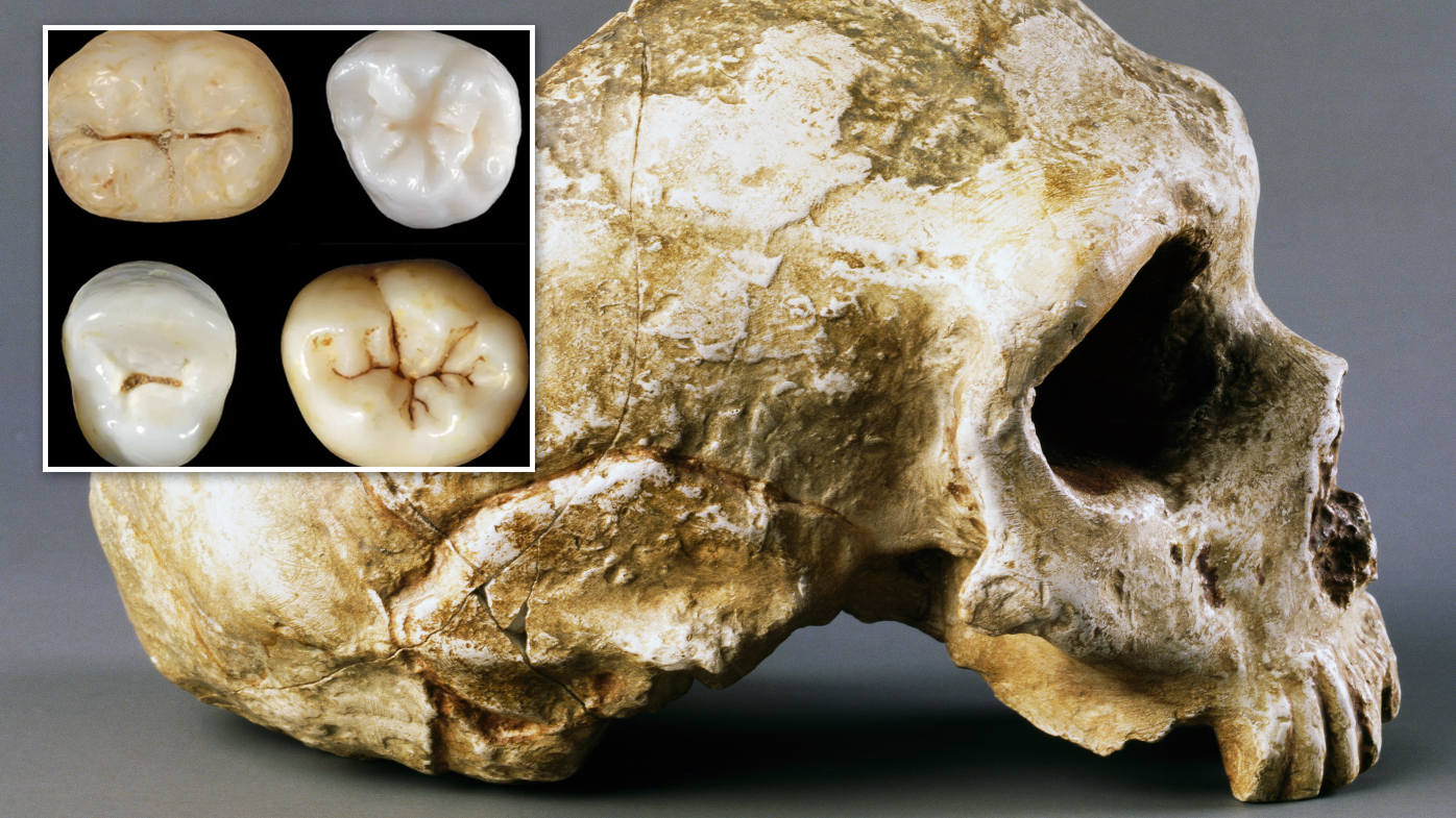 Humans and Neanderthals evolved from a mystery common ancestor earlier than first thought
