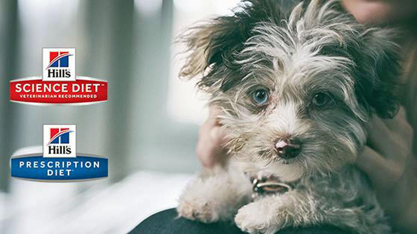 Pet food company expands recall