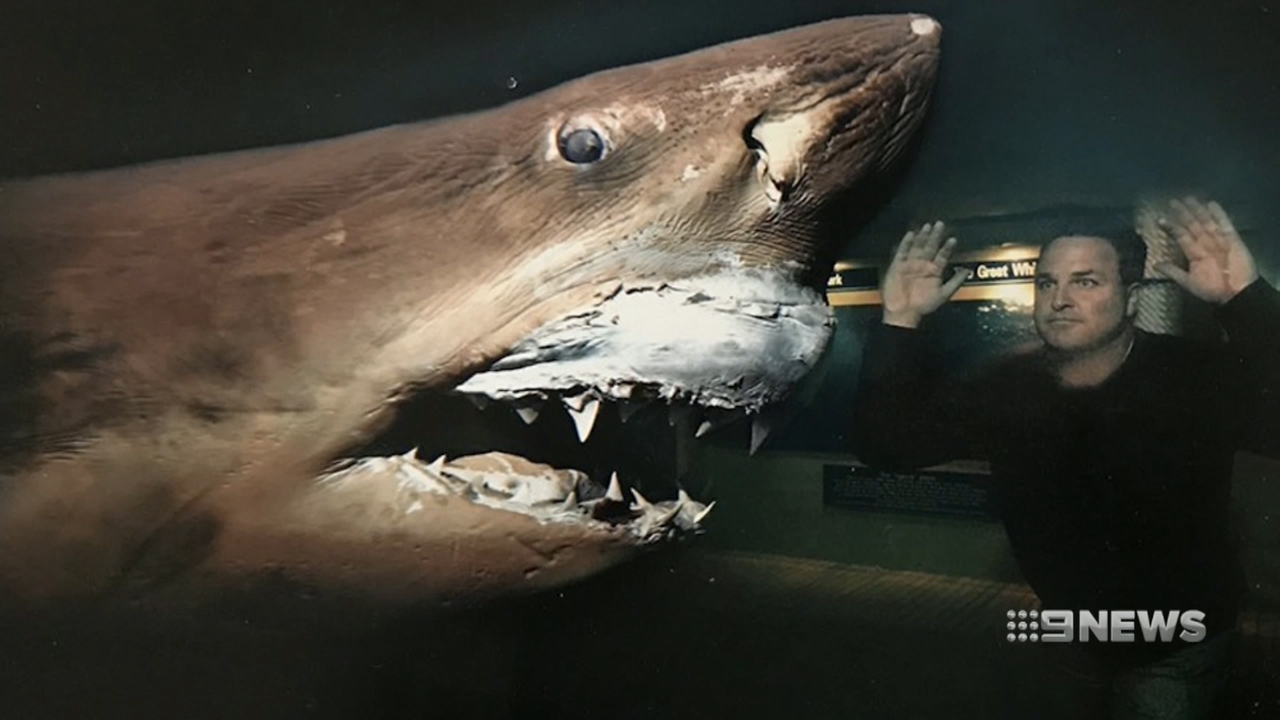 Battle to save preserved Great White Shark at abandoned wildlife park
