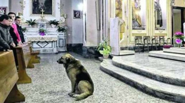 Tommy waits at the church for his owner.