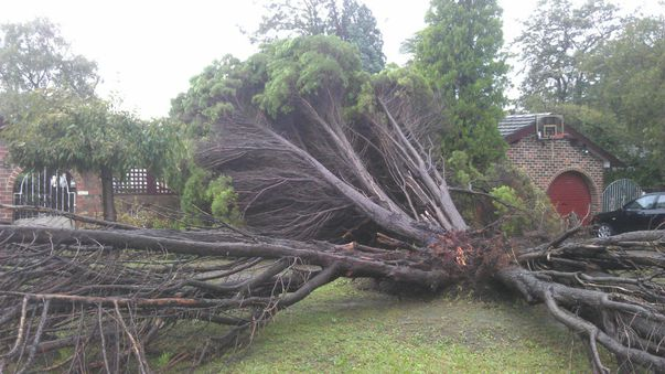 Downed trees in Castle Hill. (Jerome Wicks)