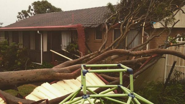A tree fall in a backyard in Gorokan. (NSW SES)