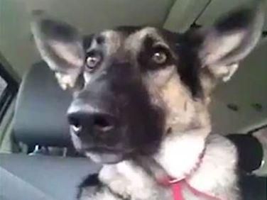 Jaxon the dog