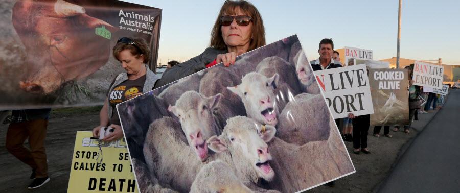 Animal cruelty alerts news updates