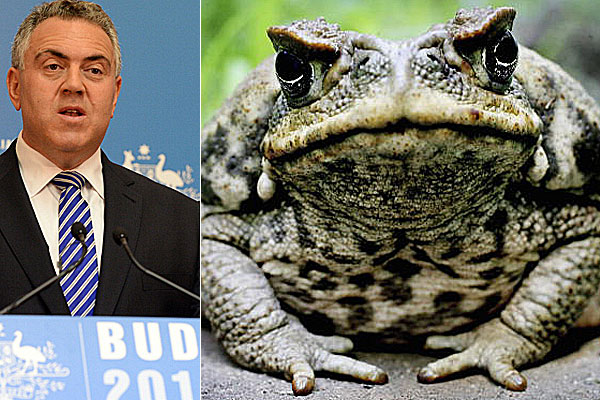 Joe Hockey, cane toad