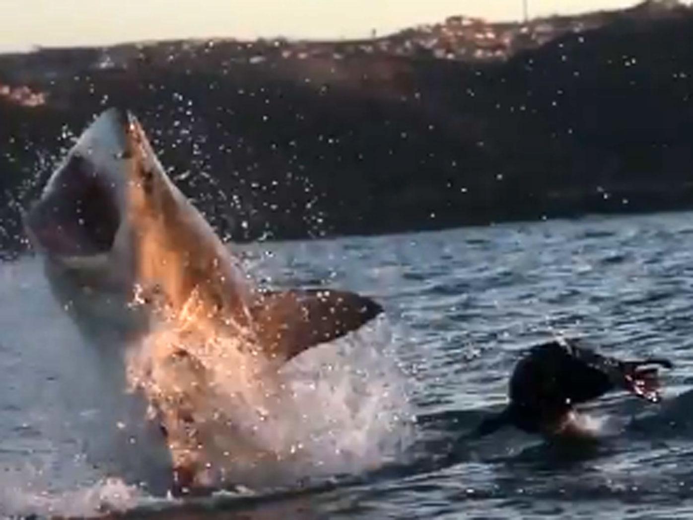 Shark Attacks In Australia: How Prevention Technology Can