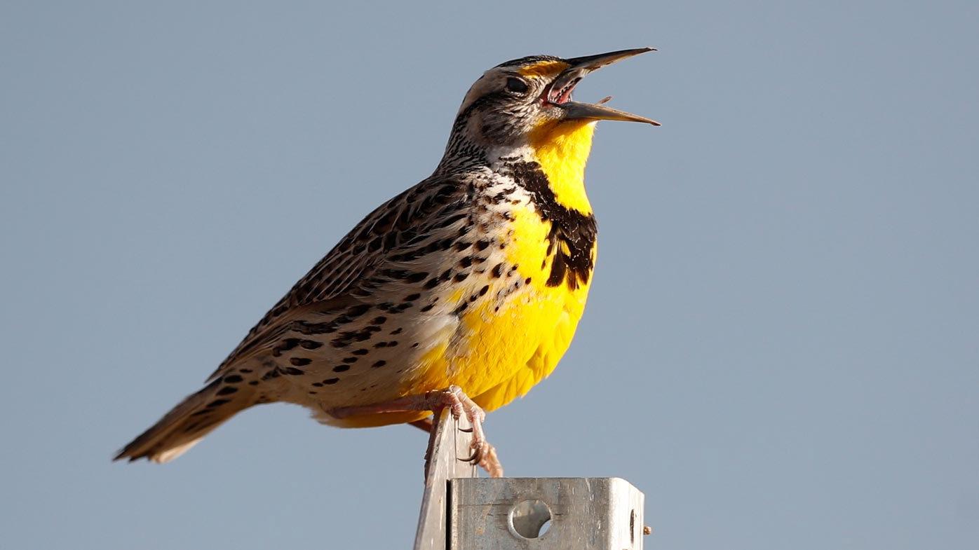 3 billion birds have gone missing since 1970