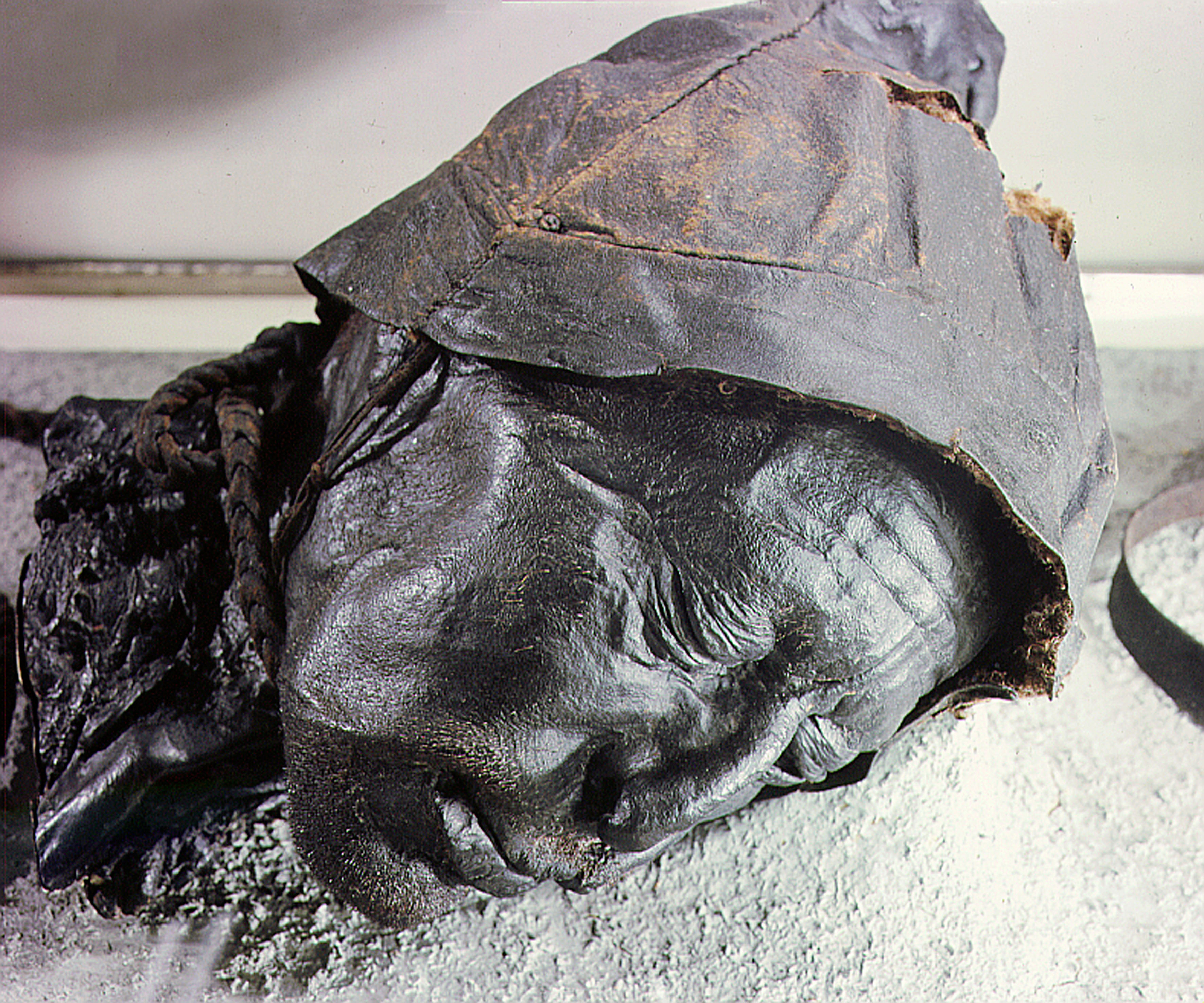 Ancient human sacrifice victim's last meal revealed