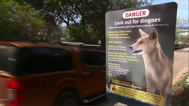 A Dingo danger sign on Fraser Island.