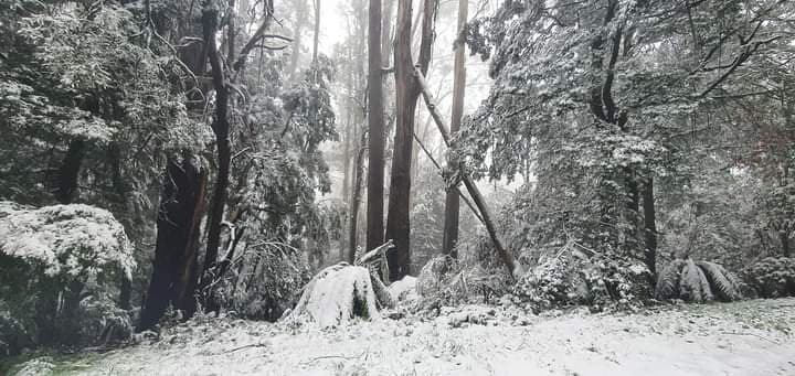 Cold snap sees heavy snowfall in Victoria