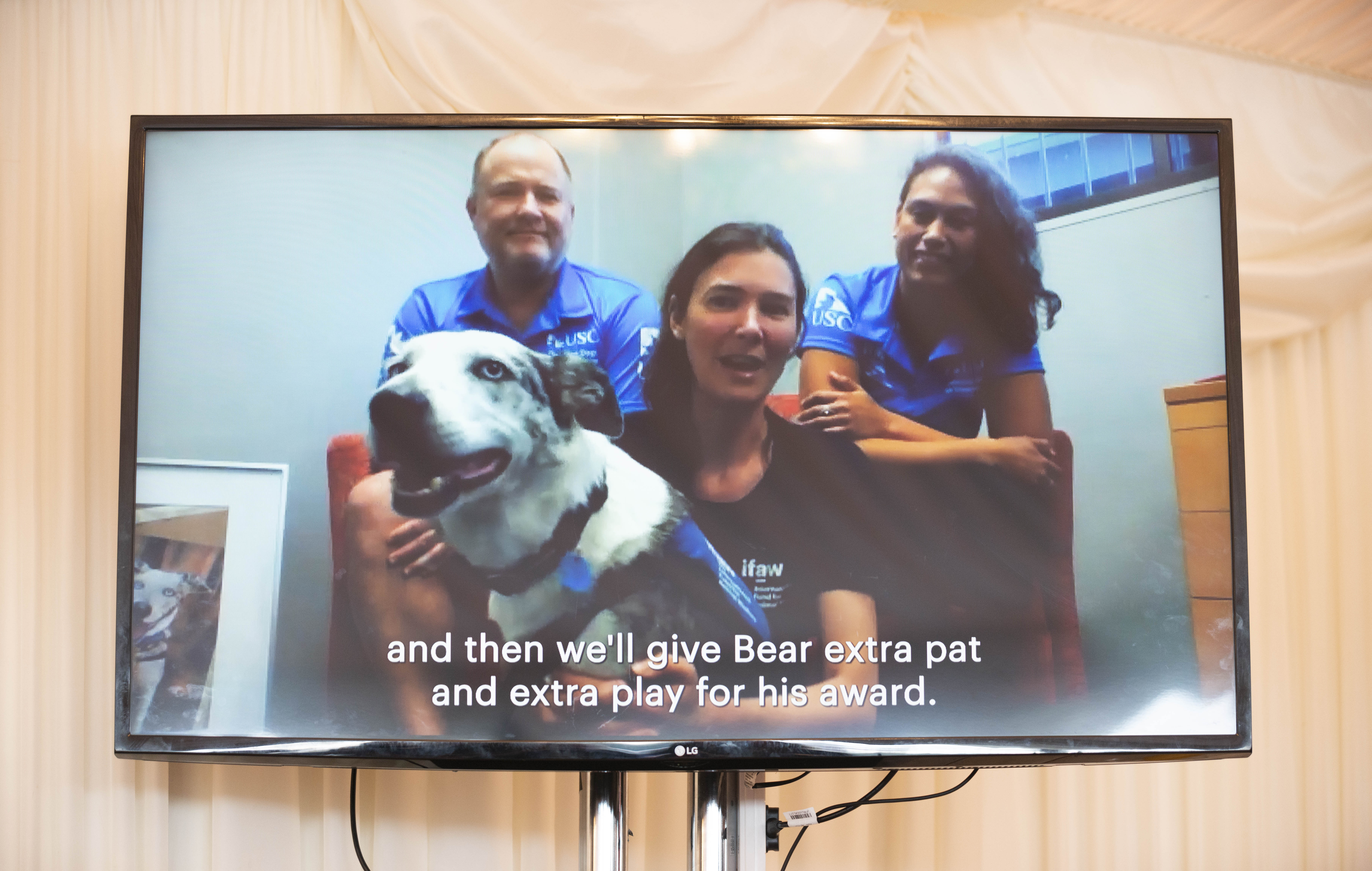 Bear and his handlers appeared over video link to receive the award.