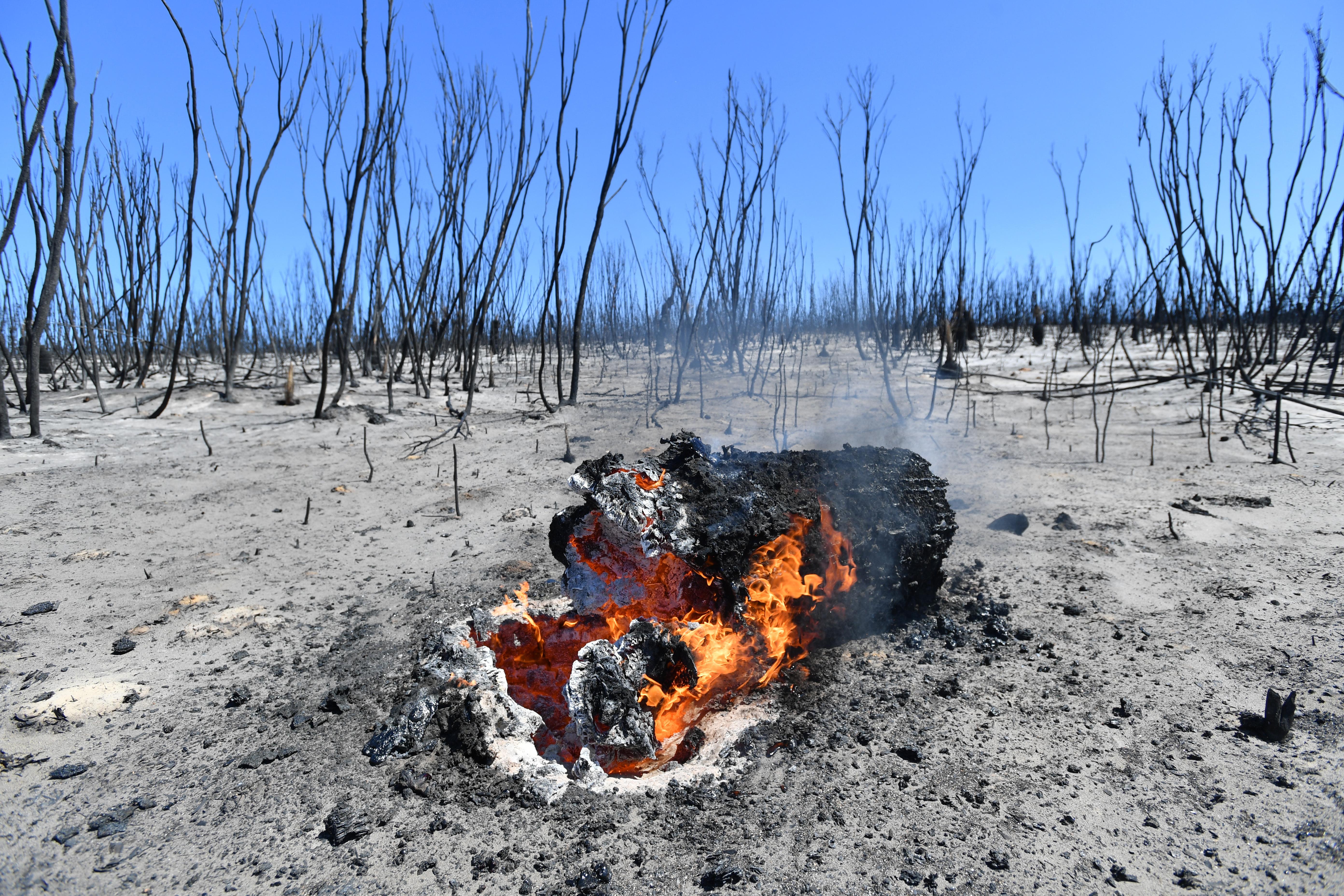 Damage in the Flinders Chase National Park after bushfires swept through on Kangaroo Island.