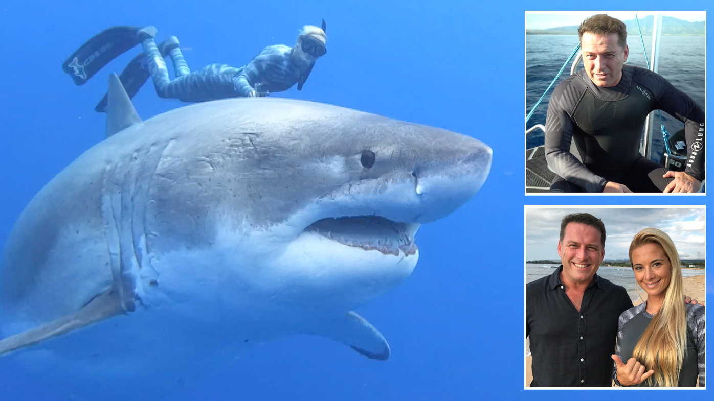 Swimming with sharks: what should we really be afraid of?