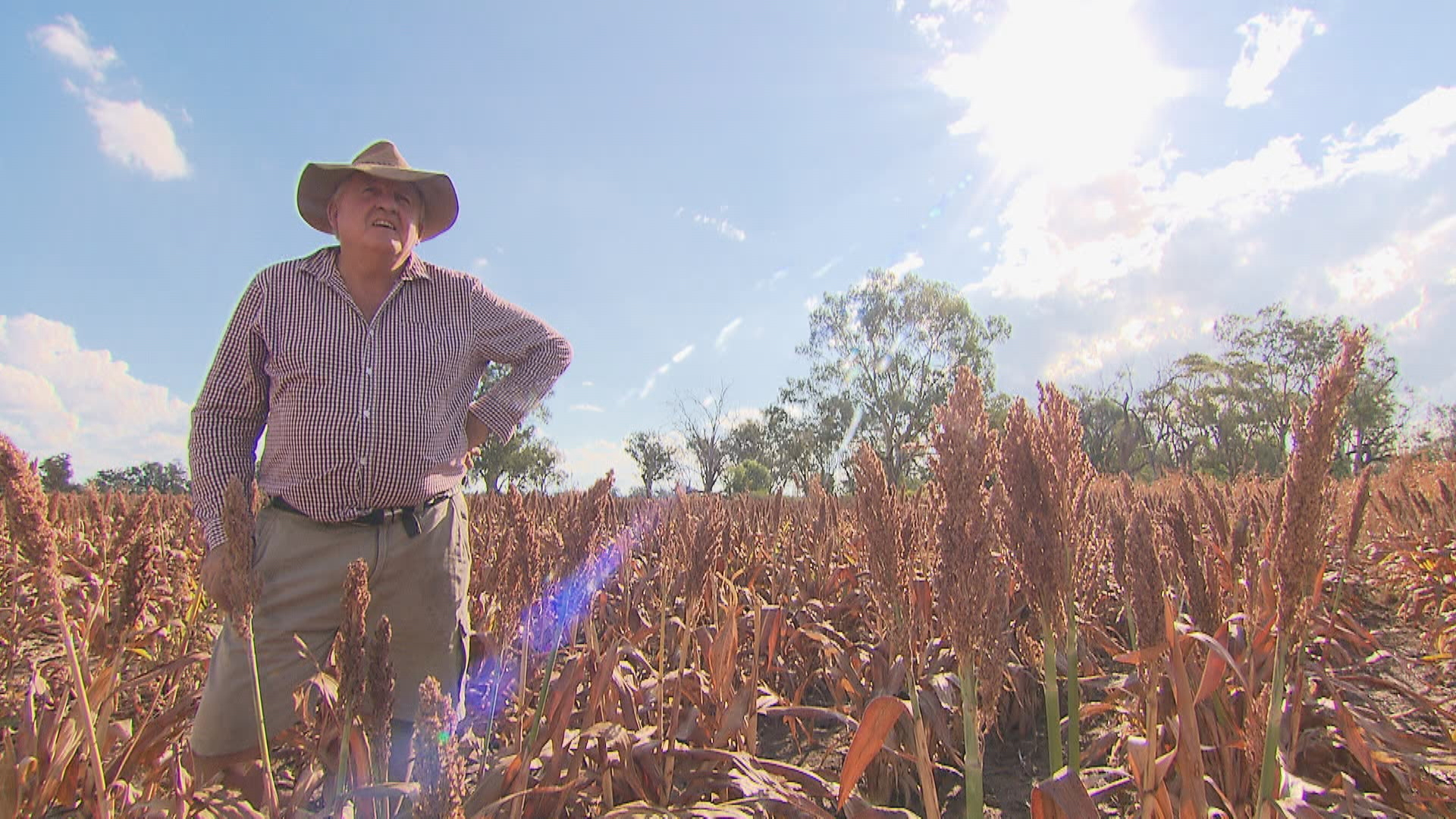 The Whiteley family farm in Warren, 500 kilometres from Sydney, has been hit hard over the last few years.