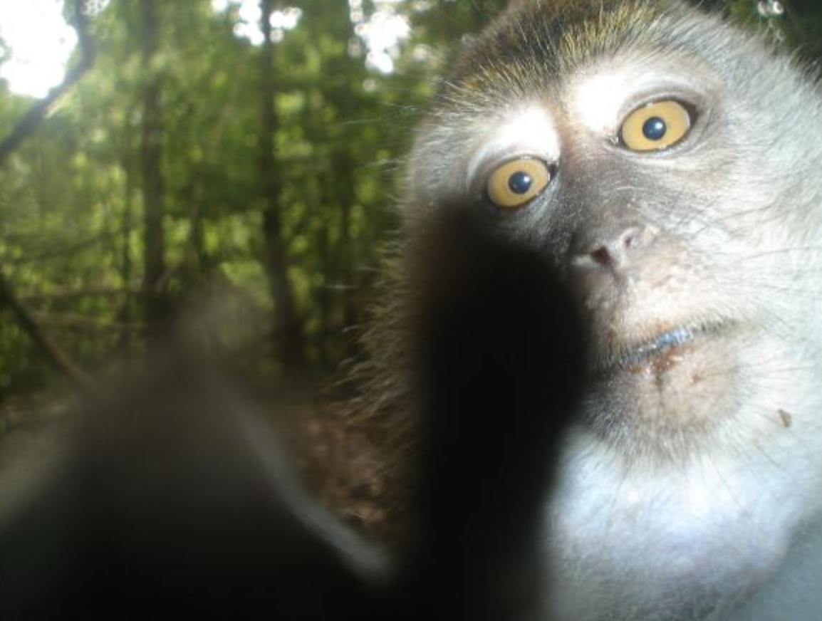 Hidden cameras give glimpse into life of rare and threatened animals