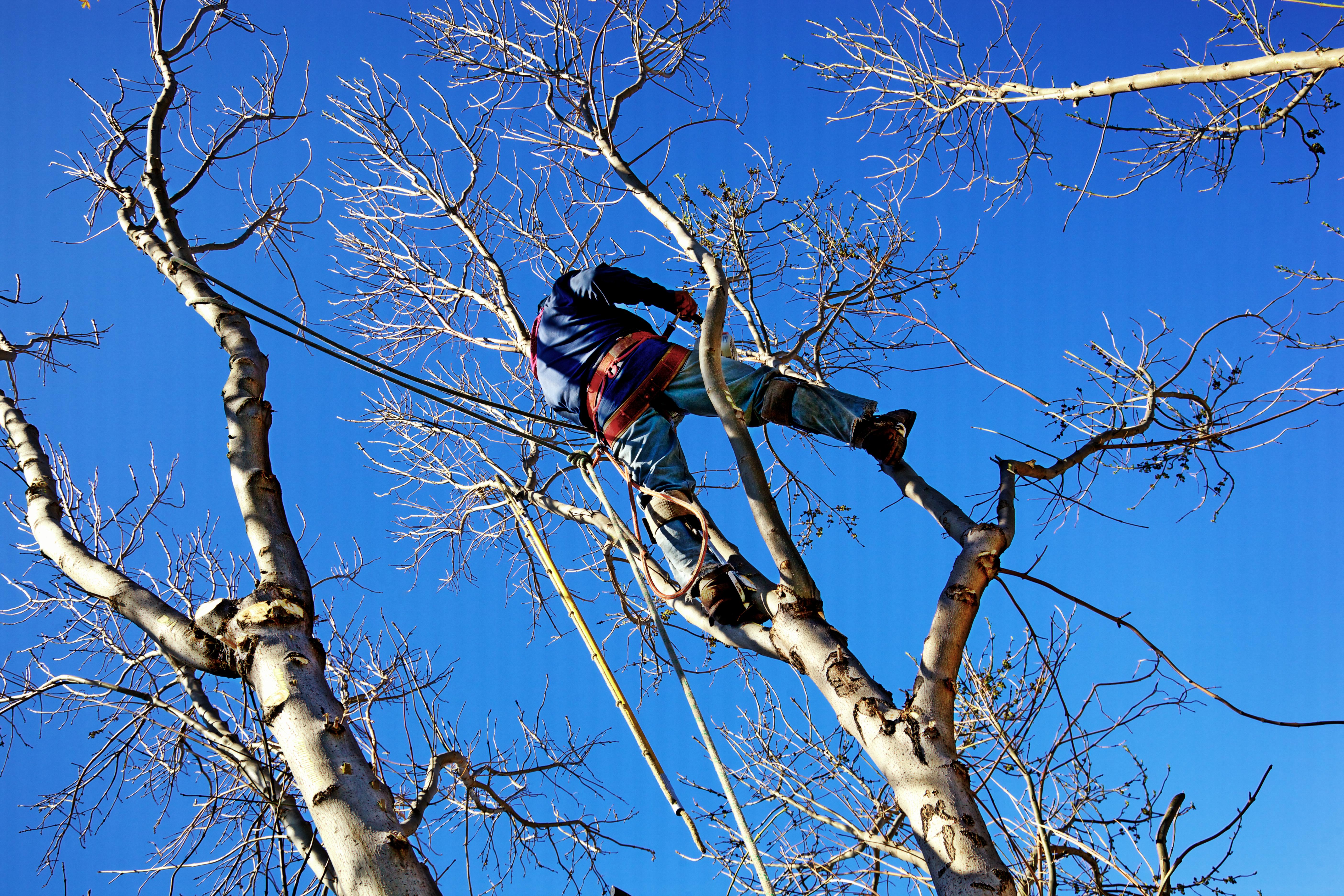 Arborist tree surgeon (file)