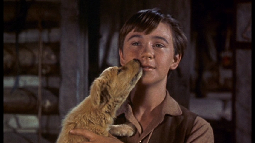 Tommy Kirk stars in Old Yeller.