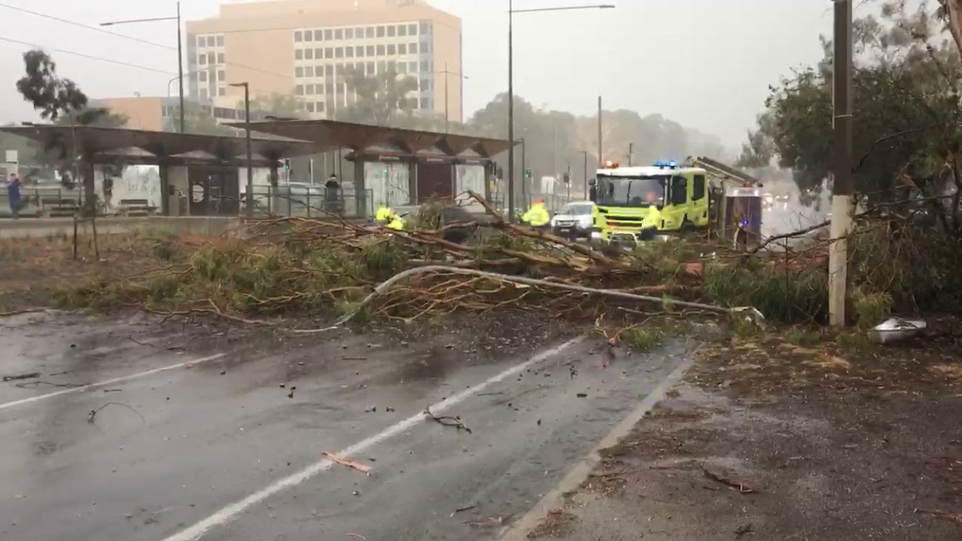 A tree down on Northbourne Avenue in Canberra's north.