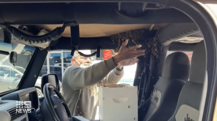 The beekeeper used his bare hands to scoop the bees inside of a box and help Mr Khan get back in the car.