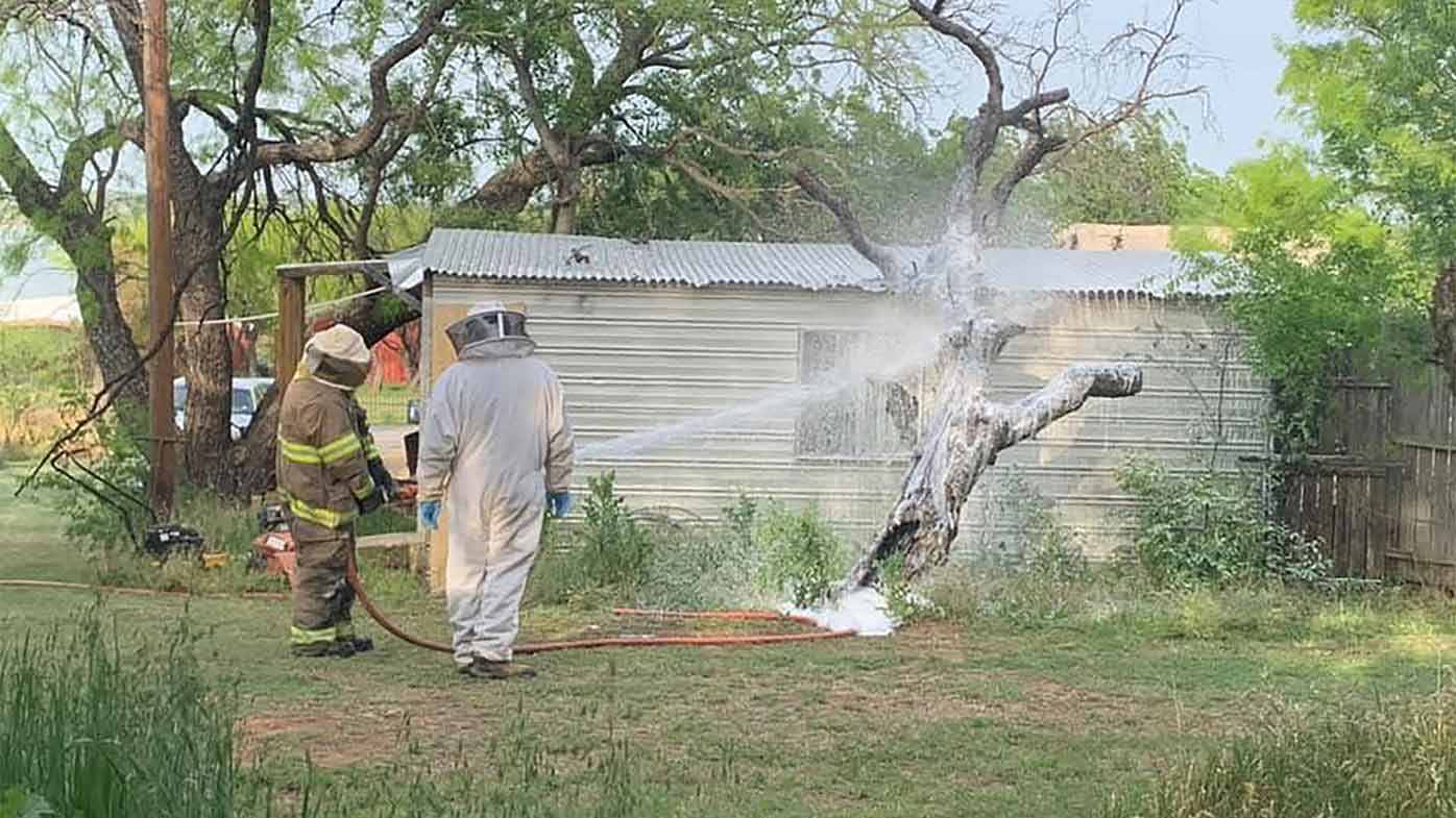 A a beekeeper and firefighter working to remove the hive.