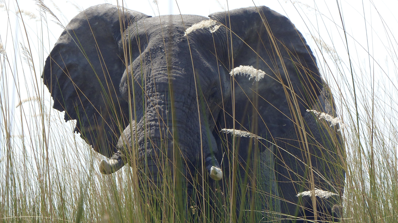 Hundreds of elephants found dead in 'catastrophic die-off'