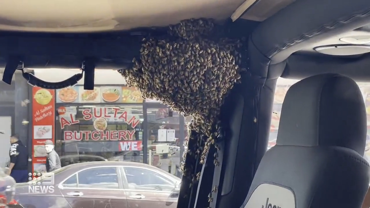 Man returns from shop to find swam of bees have taken over his car