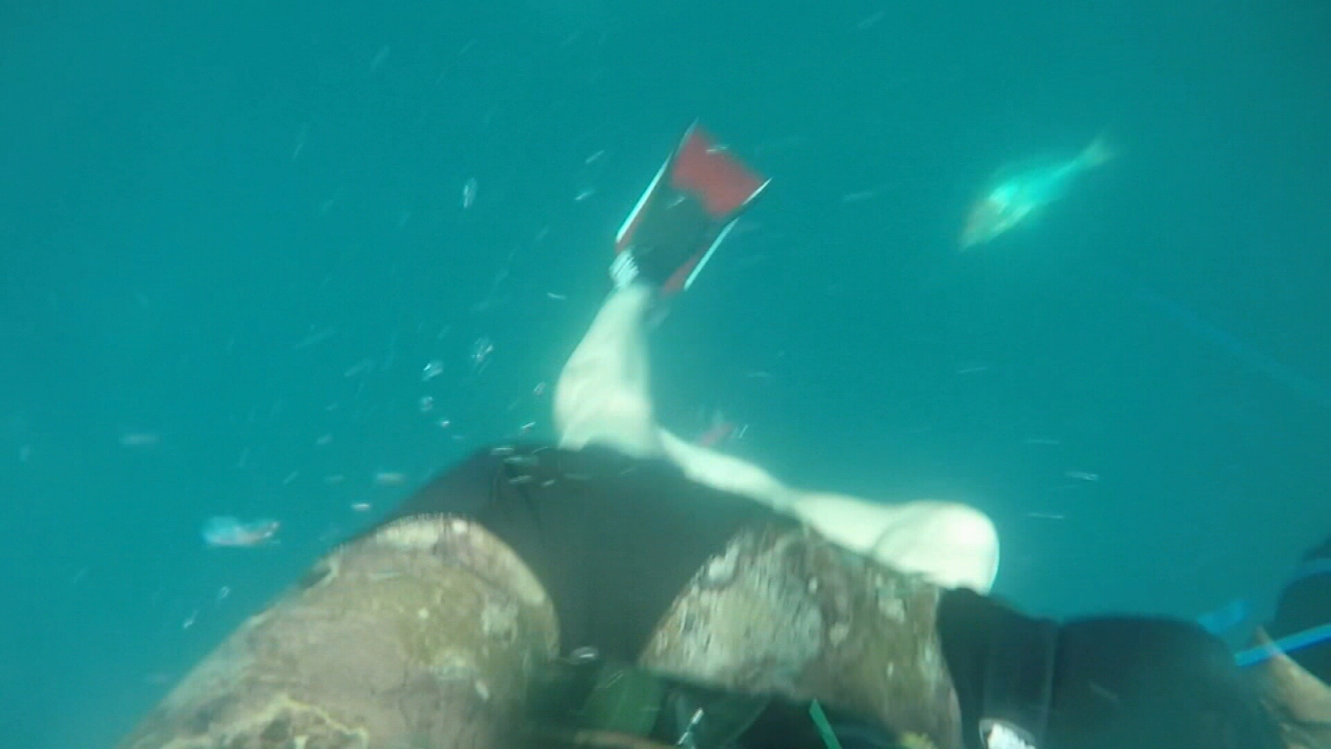 'I didn't see it': Student's terrifying shark encounter